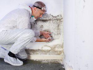 technician finding mold